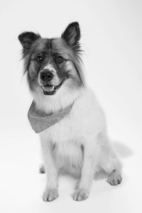 kuma-black-and-white-III-400x600
